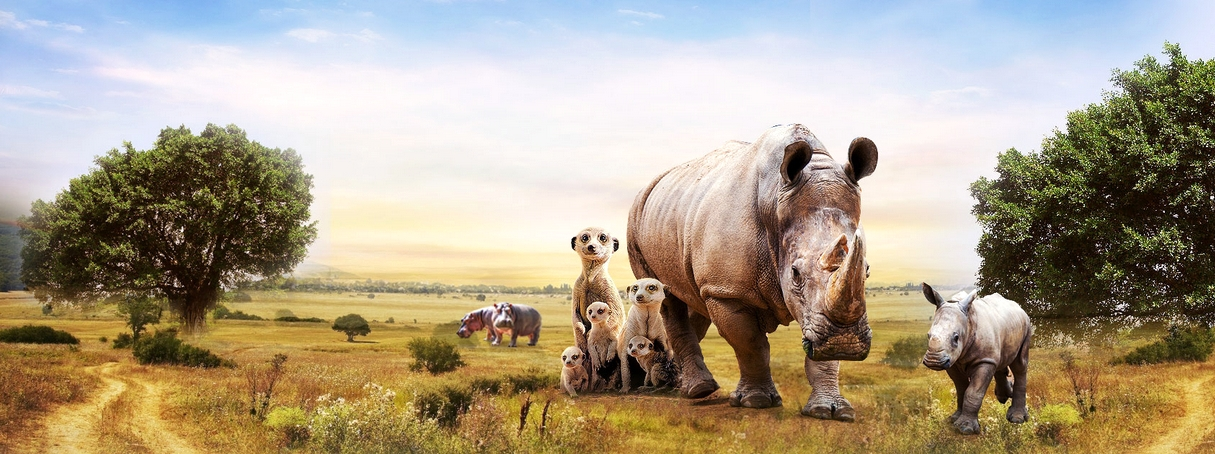 長隆野生動物園非洲長廊