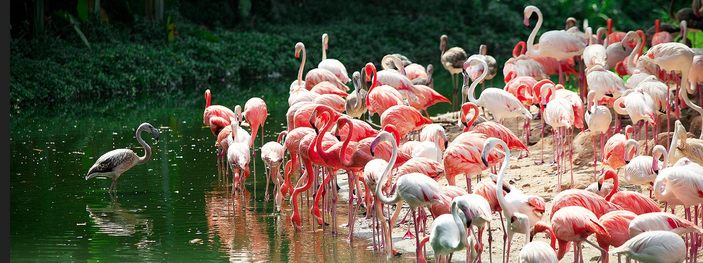 長隆野生動物園亞馬遜雨林