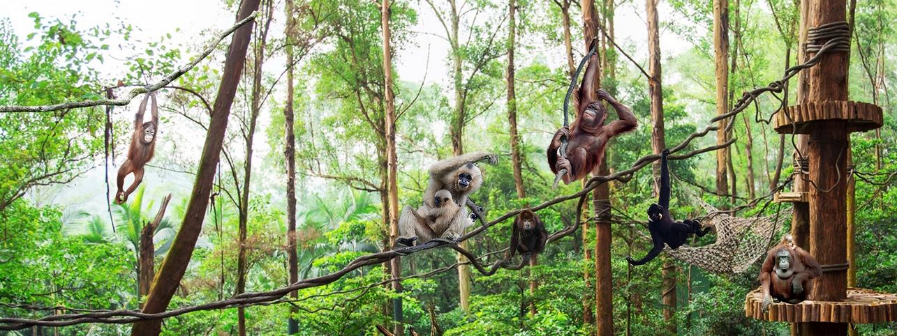 長隆野生動物園猿猴王國