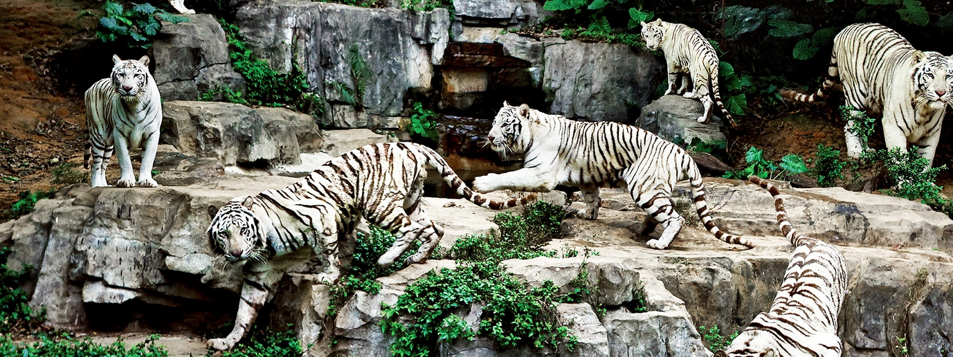 長隆野生動物園百虎山