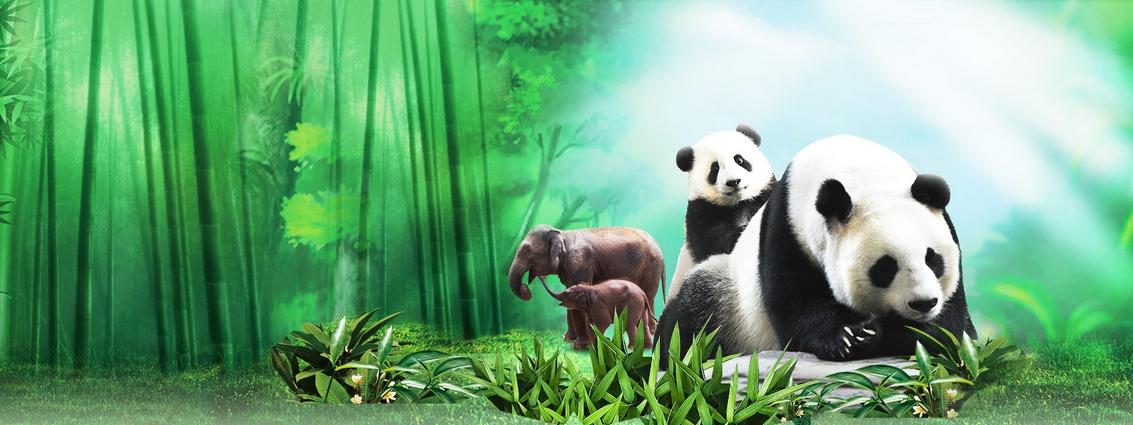 長隆野生動物園世界國寶區