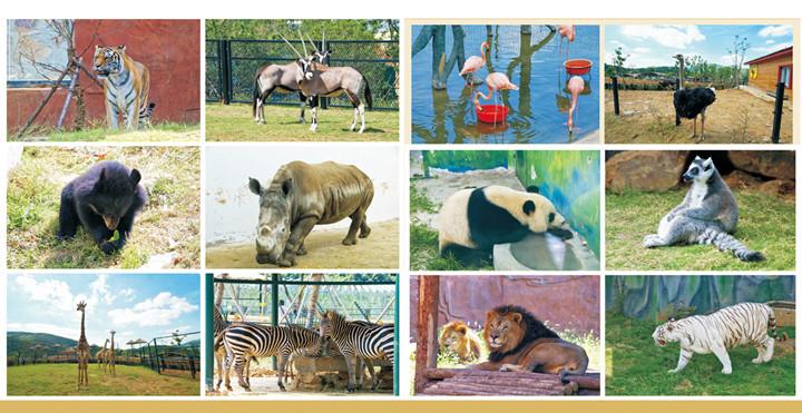 无锡动物园·太湖欢乐园动感小火车