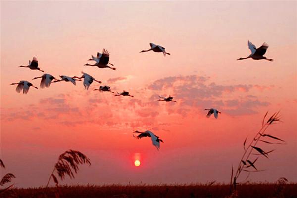 洪湖生态旅游风景区