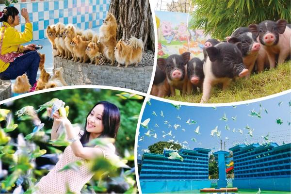 百萬葵園寵物拜年