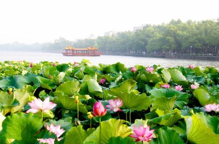 杭州、苏州、无锡、南京巴士4日跟团游苏杭美景'纯玩无购物