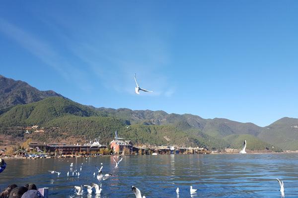 麗江瀘沽湖瀘沽湖的鳥