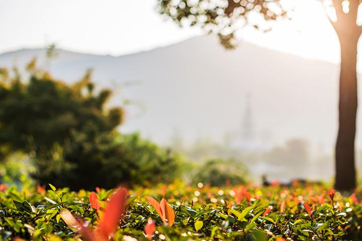 灵山大佛灵山美景