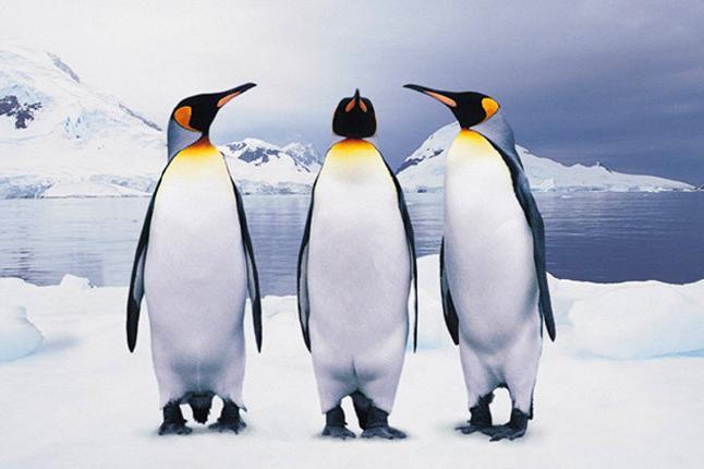 蓬莱海洋极地世界极地馆