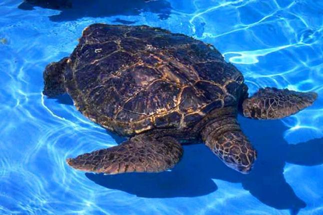 蓬莱海洋极地世界海龟馆