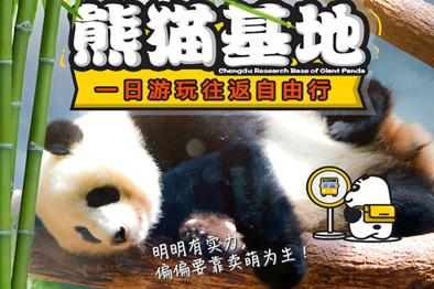 成都-熊猫基地景区巴士往返1日游含熊猫基地门票,专职车导,纯玩不进店