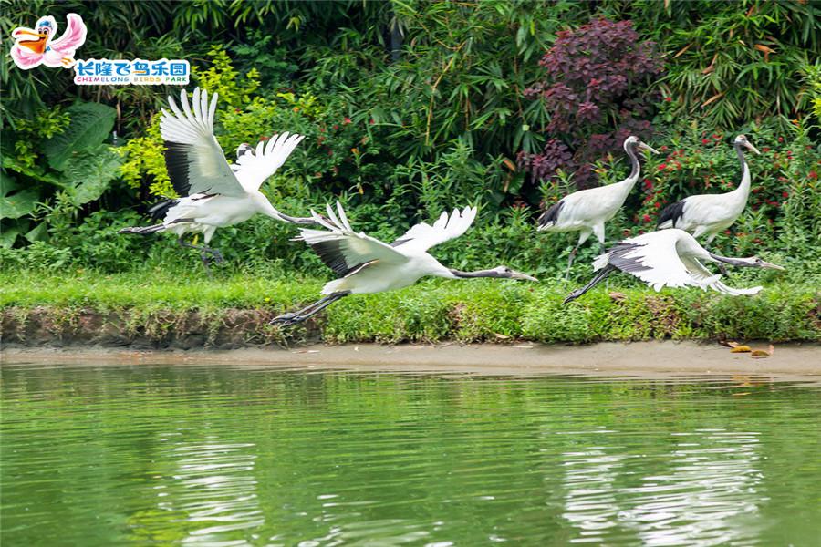 广州长隆飞鸟乐园百鸟飞歌
