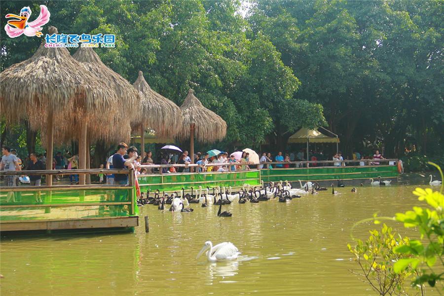 广州长隆飞鸟乐园鹈鹕放飞展示