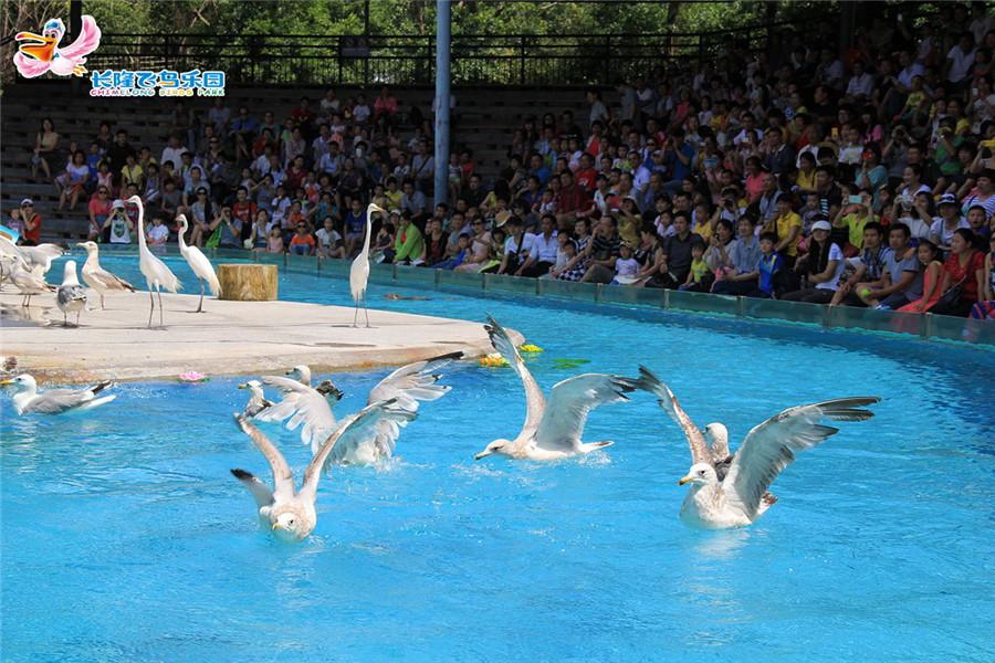 广州长隆飞鸟乐园湿地精灵秀