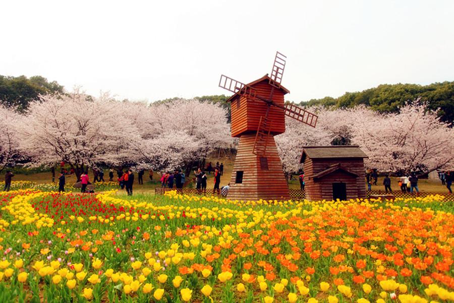 苏州上方山国家森林公园上方山百花节