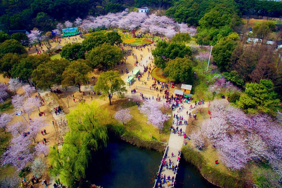 苏州上方山国家森林公园上方百花节