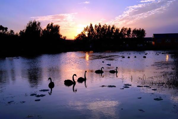 双龙湖观鸟园景区