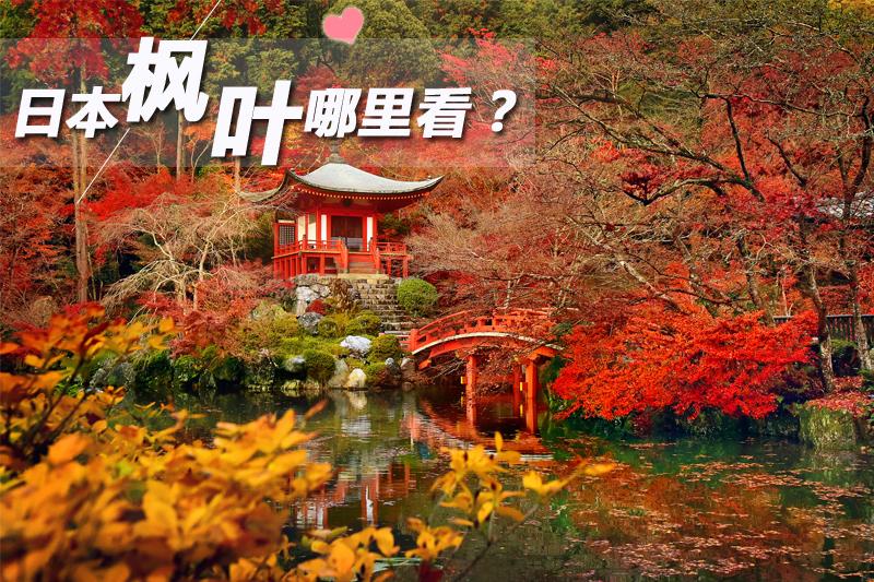日本楓葉哪里看