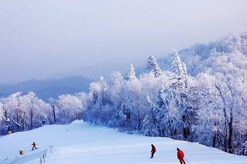 哈尔滨、亚布力5S滑雪场、雪乡双飞5日4晚跟团游[超值预售]赠送手机暖宝宝、保暖三件套