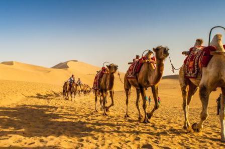 吐鲁番博物馆-库木塔格沙漠1日当地游纯玩无购物,高铁往返,下单即赠旅意险,走进与城市相连并存的库木塔格沙漠