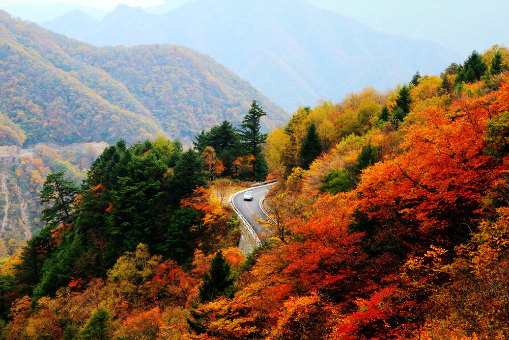 长江三峡9日动卧游[长江三峡、神农架自然保护区、武隆生态保护区]绝无遗憾的好旅程