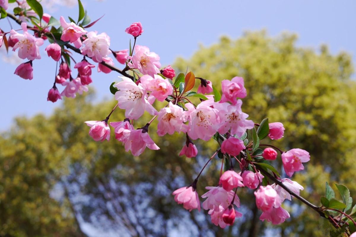 无锡鼋头渚 登三山仙岛 蠡湖中央公园1日巴士跟团游特色菖蒲节