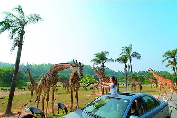 广州长隆、动物园、欢乐世界、珠海长隆3日巴士跟团游专车接站,玩转双长隆,动物园,欢乐世界,海洋王国精彩不断