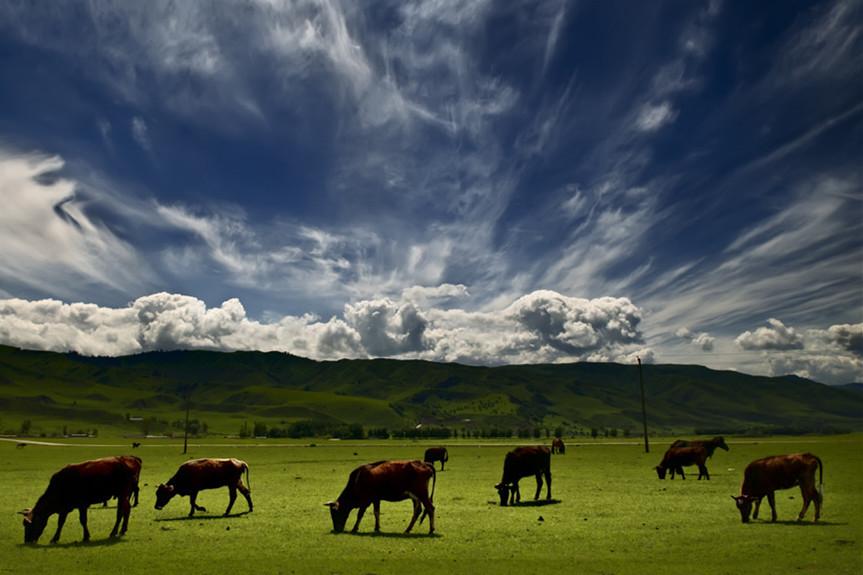 那拉提草原、巴音布鲁克草原、赛里木湖、霍尔果斯口岸双卧5日当地游[零购物真纯玩]风吹草低见牛羊