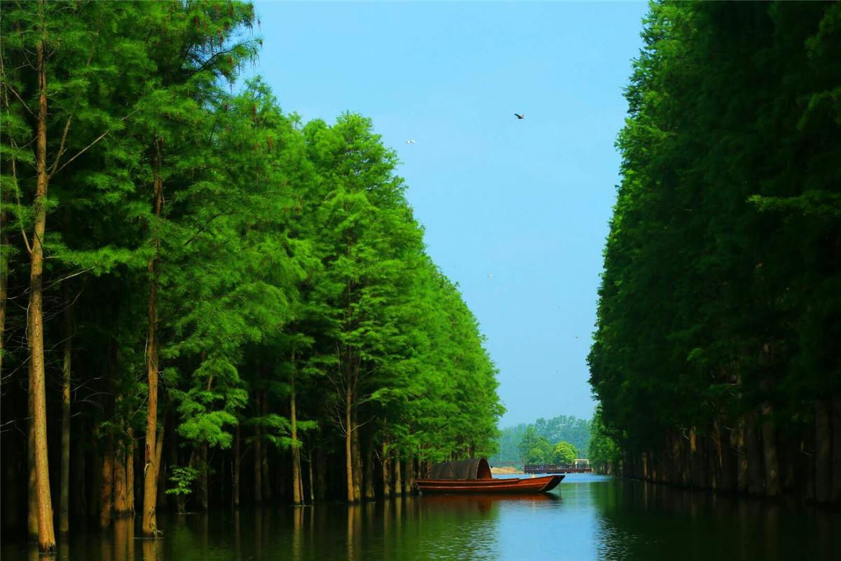 仙桃梦里水乡1日巴士游赏金色杉叶,看梦里水乡