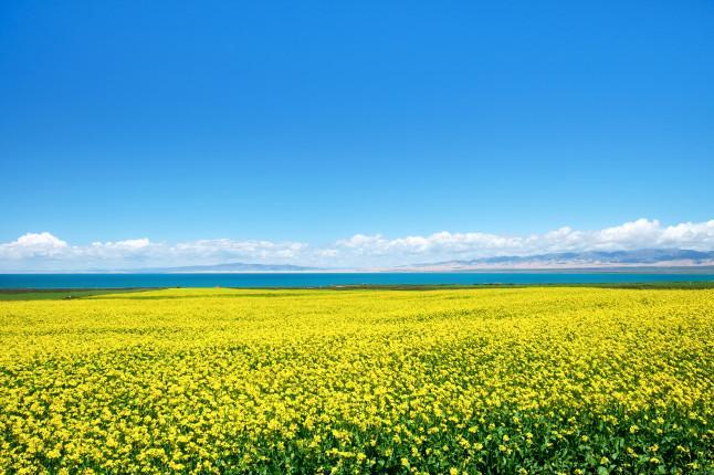 西宁、拉萨、林芝、青海湖、羊湖纳木措13日三卧跟团游青藏铁路、 三大圣湖、心灵净土、西藏江南、特色藏餐