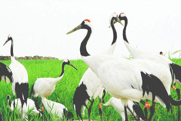 哈尔滨、太阳岛、五大连池、齐齐哈尔5日双卧跟团游俄风冰城、湿地观鹤、火山矿泉