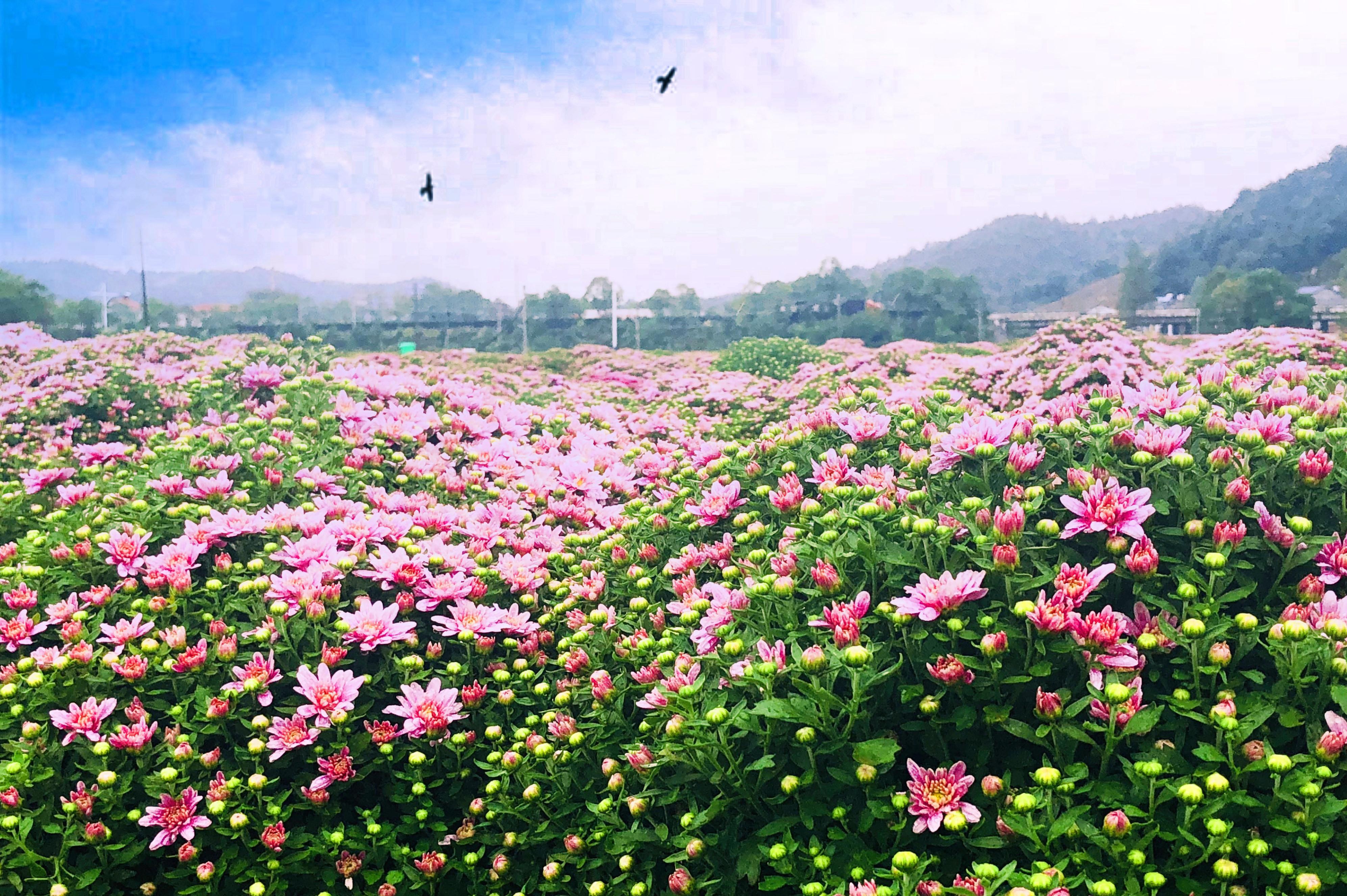 菊花博览园