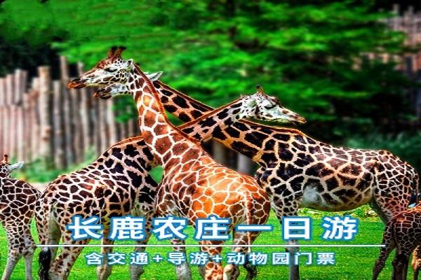 广州出发佛山顺德长鹿农庄动物园巴士1日深度游成人可送200游乐金,80喂食金、动物园全票