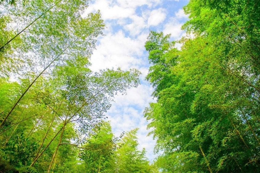 广州、溪头村1日跟团游穿越十里野竹林,品尝特色竹筒饭、山水豆腐花,无购物无隐形消费,周末休闲、锻炼、溜娃好去处