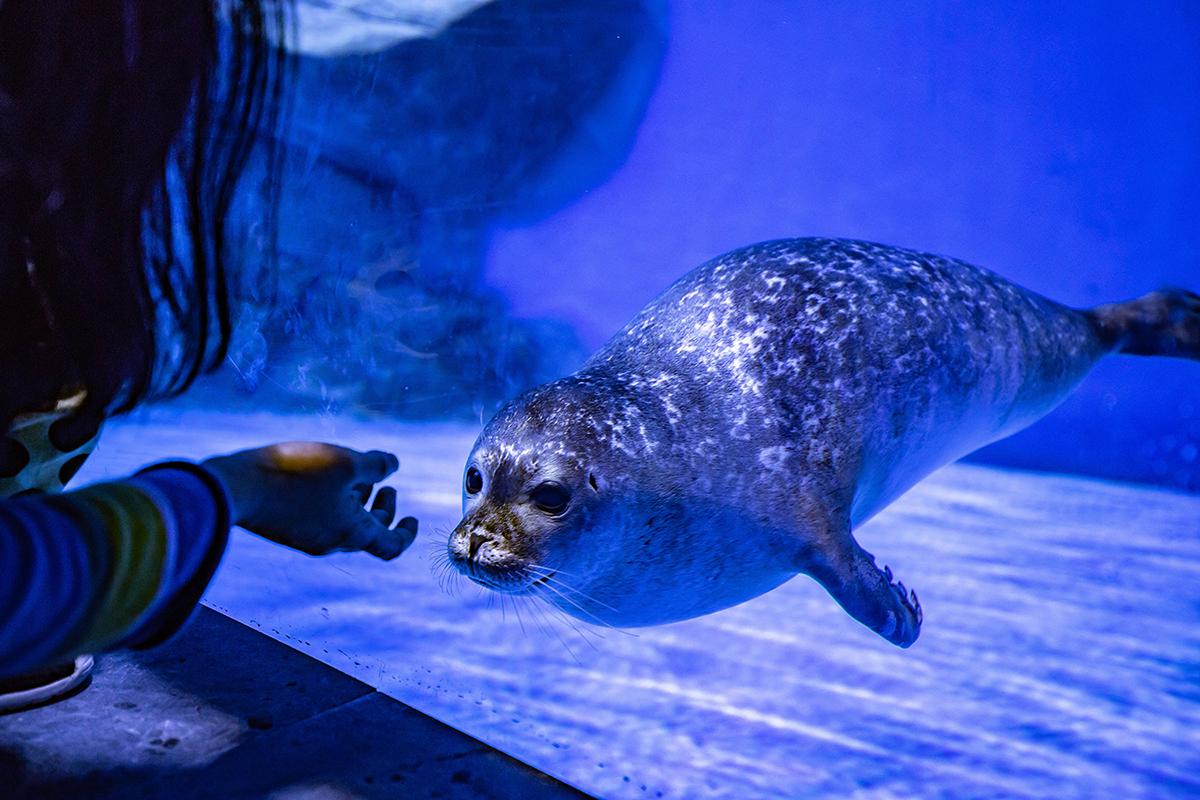 上海海昌海洋公园冰山北极馆