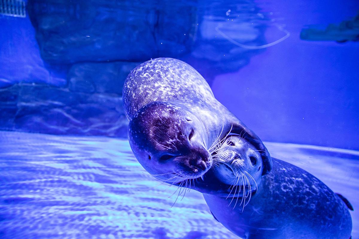 上海海昌海洋公园海兽探秘馆