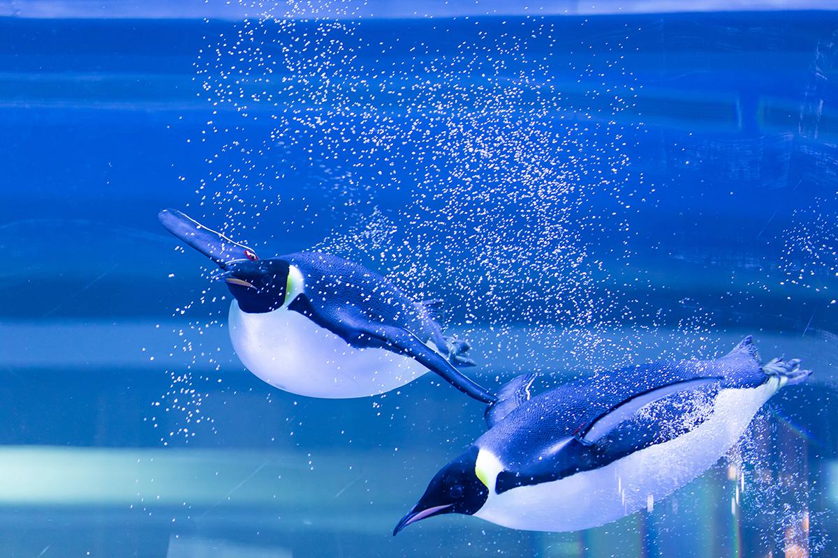上海海昌海洋公园南极企鹅馆