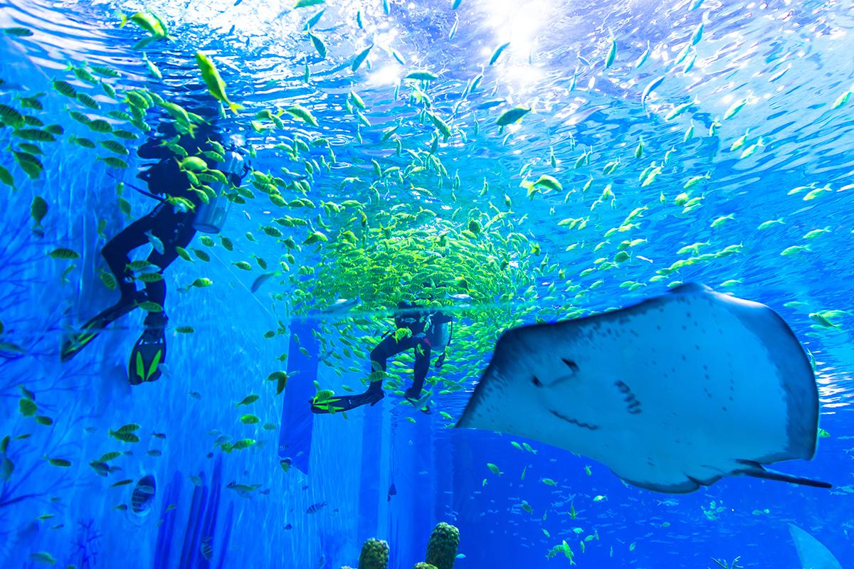 上海海昌海洋公园海底世界馆