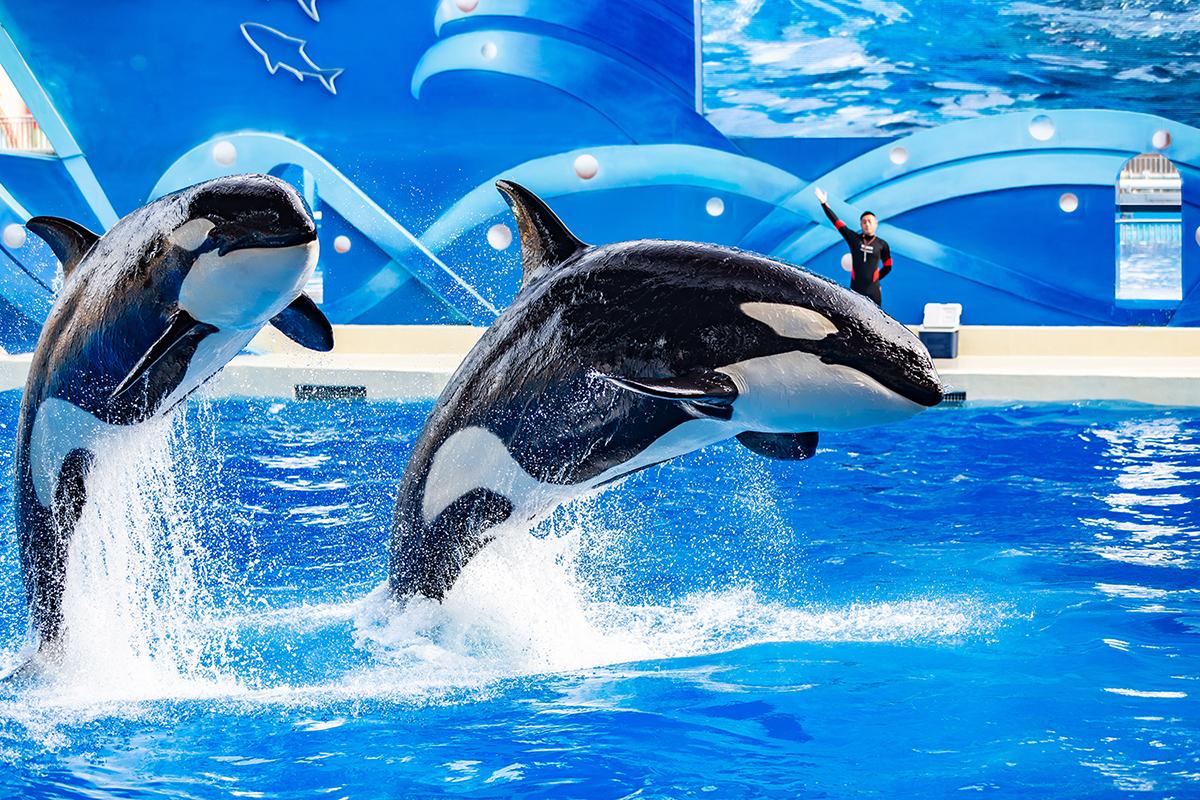 上海海昌海洋公园虎鲸剧场