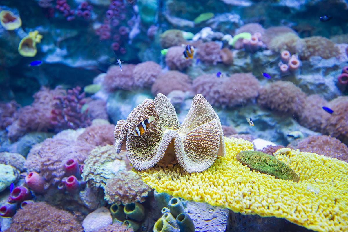 上海海昌海洋公园珊瑚水母馆