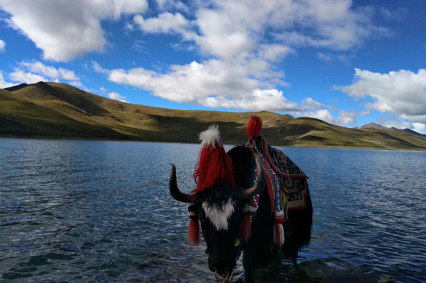 西藏拉萨、林芝、日喀则、珠峰大本营15日双卧跟团游[进藏首选]0自费、赠6大特色美食,1晚宿鲁朗国际小镇