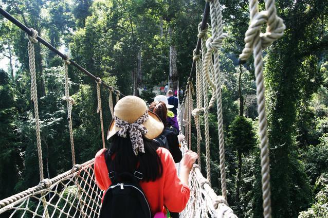 云南西双版纳5日游[望天树空中走廊 野象谷 基诺山寨 曼听公园]体验空中走廊 探秘热带雨林 邂逅野象