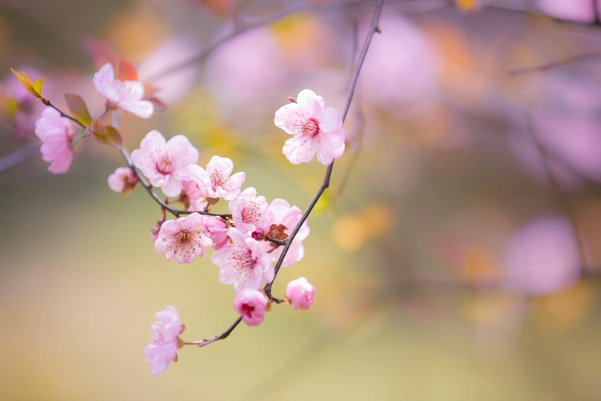 平谷石林峡草莓采摘巴士1日当地游[女神特惠 玻璃观景 采摘草莓 ]情侣亲子游