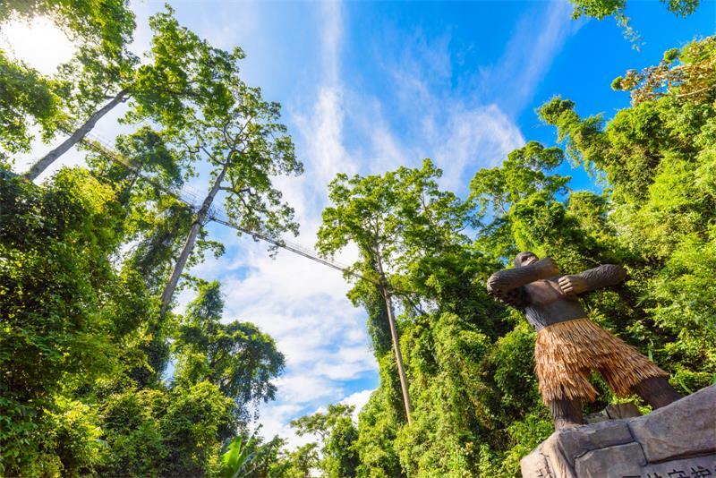 西双版纳 植物园 空中走廊 野象谷 森林公园5日游[野象表演 孔雀之恋 ]植物王国 望天树空中走廊 感受异域风情 亲子游 父母游 蜜月游优选