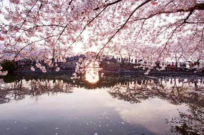 无锡2日巴士跟团游[赏樱圣地]游龙凤谷  南长街  鼋头渚,打卡网红玻璃桥,与樱花来一场浪漫的邂逅