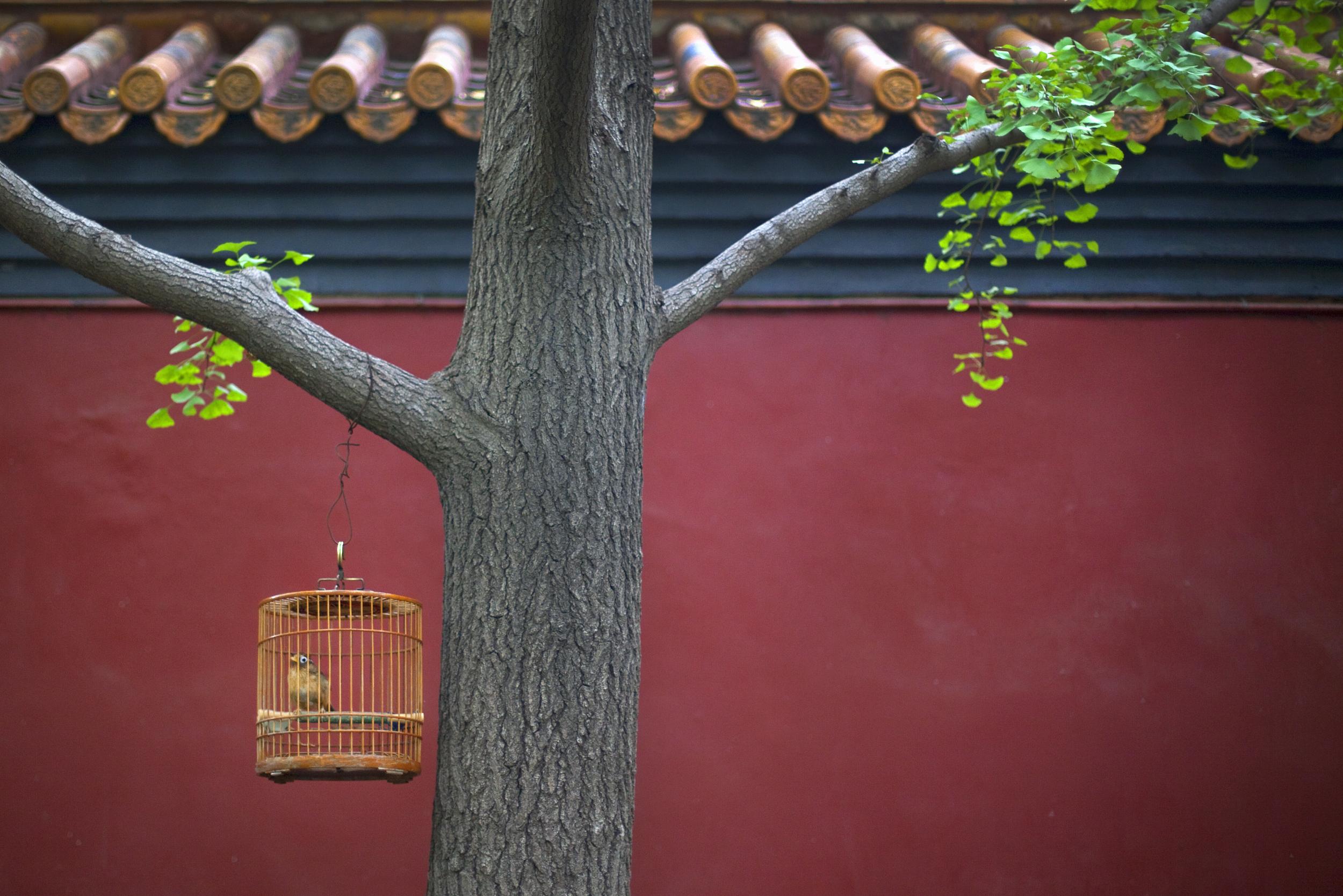 北京巴士5日当地游住品牌快捷连锁酒店,品特色全鸭餐、尝地道京味菜,经典景点全安排,观庄严升旗仪式,赠天安门集体合照
