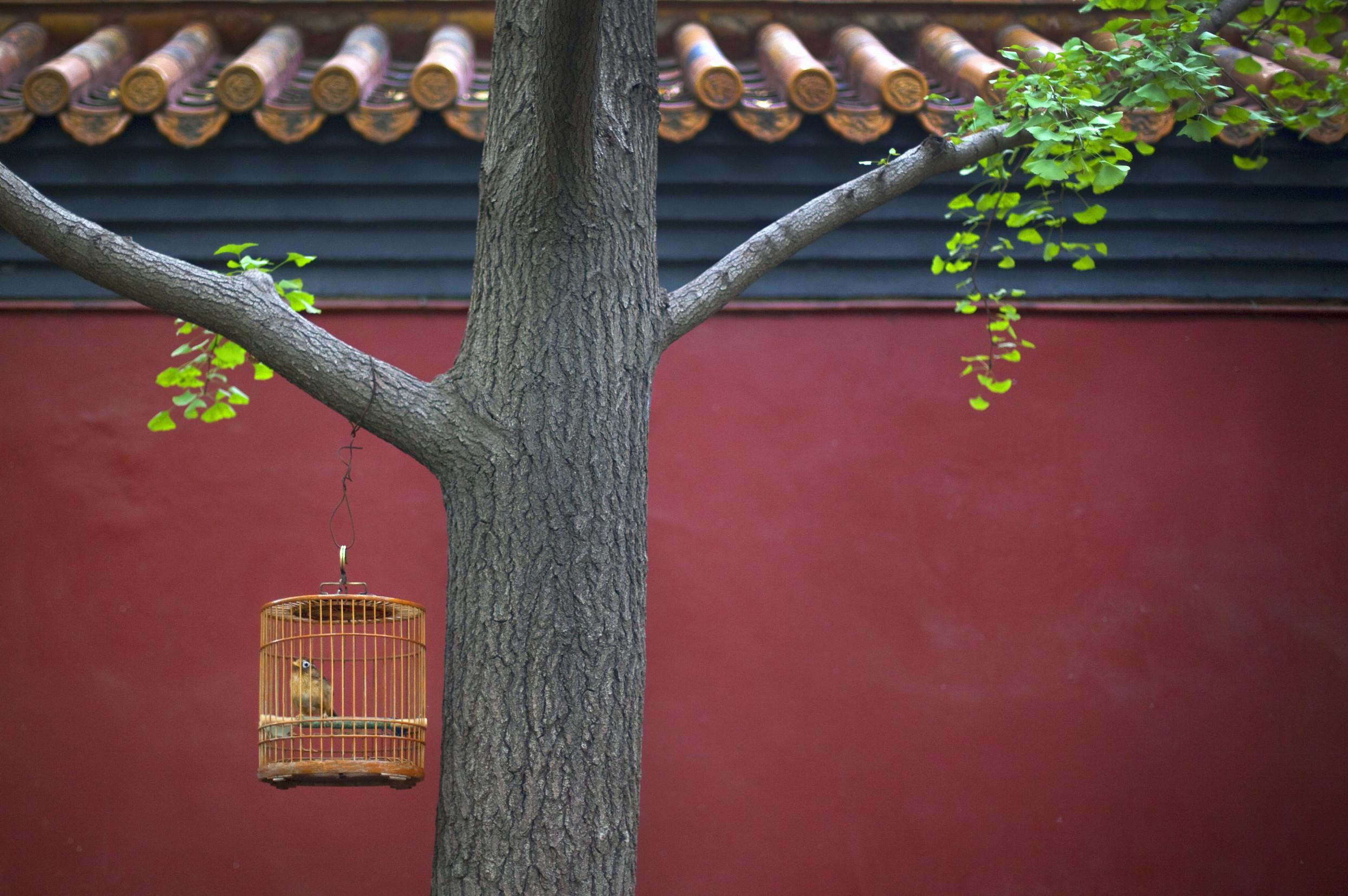 北京故宫1日深度游网红导游深度讲解、配备无线耳麦、专属助理随叫随到