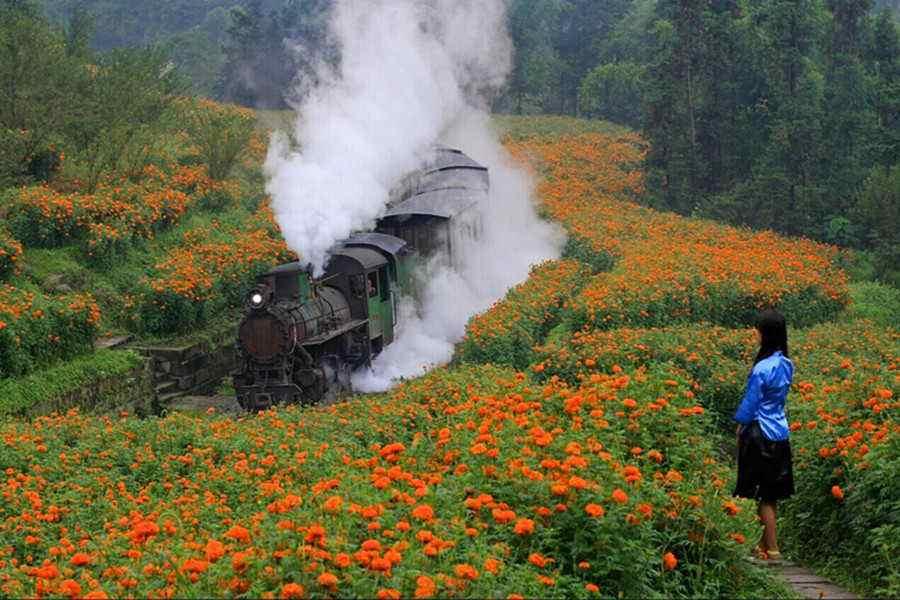 嘉阳小火车纯玩1日游[带上家人和孩子一起出游吧]看花,坐蒸汽小火车,乘坐嘉阳蒸汽小火车穿梭在花海中,体验黄村矿井