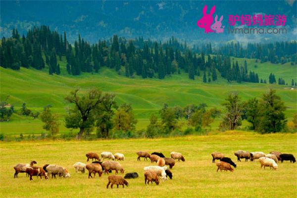 新疆伊犁那拉提草原、赛里木湖、霍尔果斯口岸双卧4日当地游纯玩0购物 火车往返省时省力
