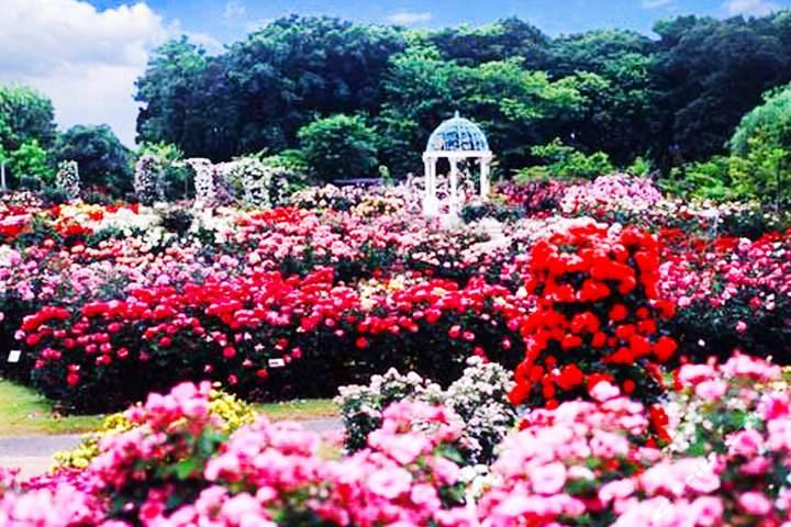 【错峰游】海南三亚-蜈支洲岛-分界洲岛-呀诺达热带雨林文化区-椰田古寨-玫瑰谷5天4晚游