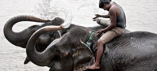 大象繁殖中心